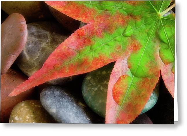 Smooth Rocks And Fall-colored Maple Leaf Greeting Card by Jaynes Gallery