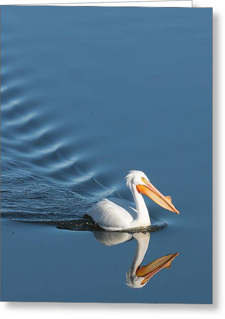 Lake Cruiser Greeting Card