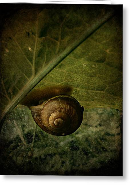 Snail Camp Greeting Card