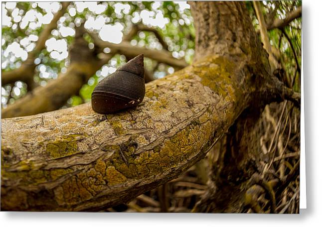 Snail Greeting Card by Carl Engman