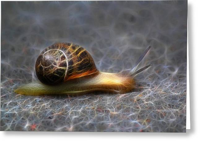 Snail Dreams Greeting Card by Shane Bechler