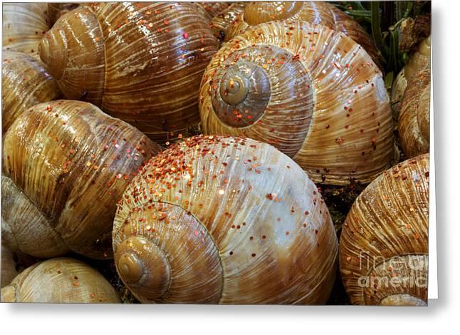 Snail Houses Greeting Card by Jolanta Meskauskiene