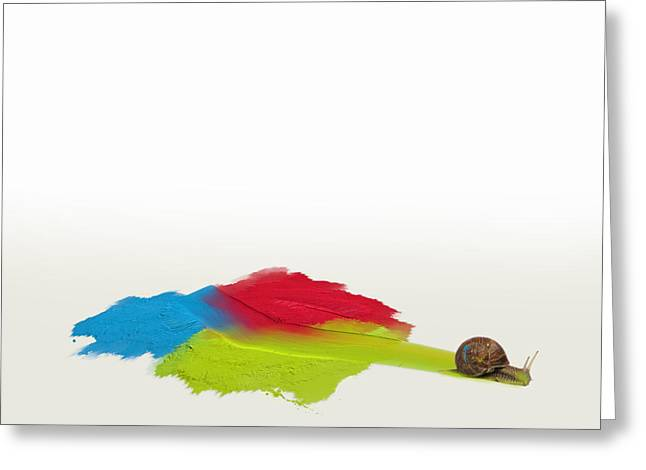 Snail In Oils Greeting Card