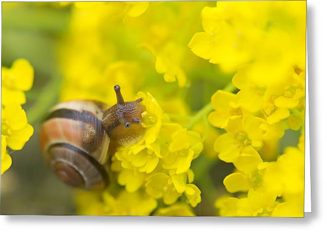 Greeting Card featuring the photograph Snail by Jaroslaw Grudzinski