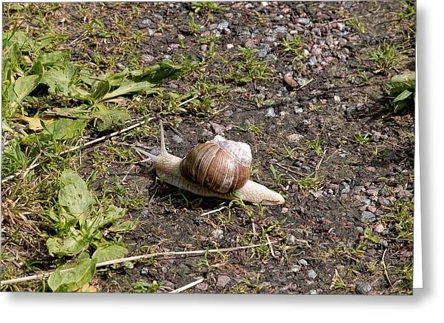 Greeting Card featuring the photograph Snail by Leif Sohlman