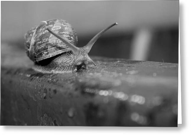 Snail Greeting Card by Lora Lee Chapman