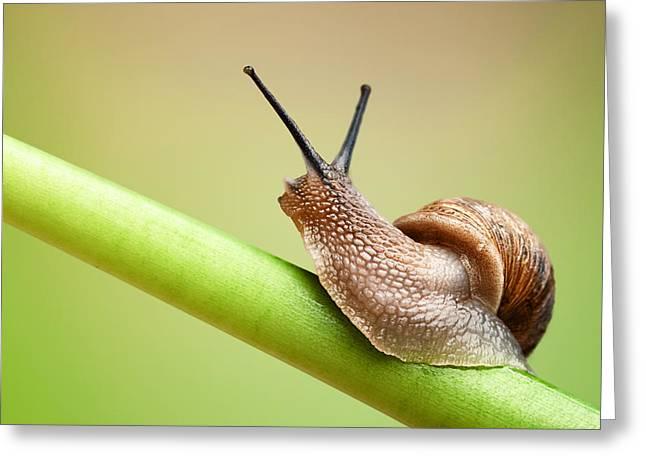 Snail On Green Stem Greeting Card