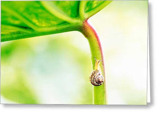 Snail On Leaf Crawling Upward Greeting Card