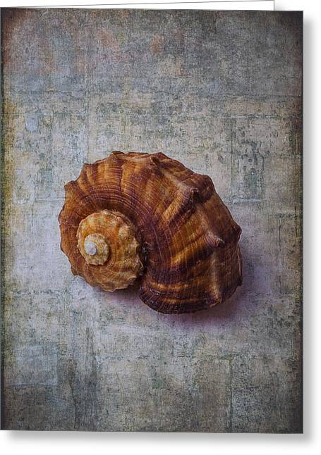 Snail Shell Study Greeting Card by Garry Gay
