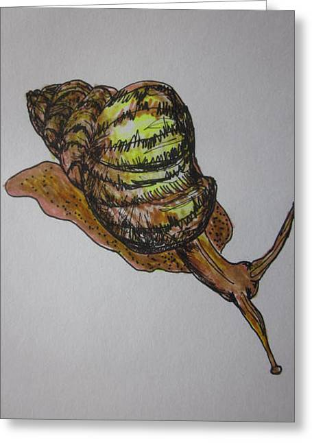 Snail Sketch Greeting Card by Cherie Sexsmith