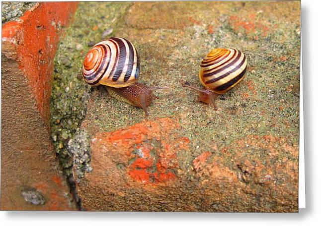 Greeting Card featuring the photograph Snail Snail The Gangs All Here by Mary Bedy