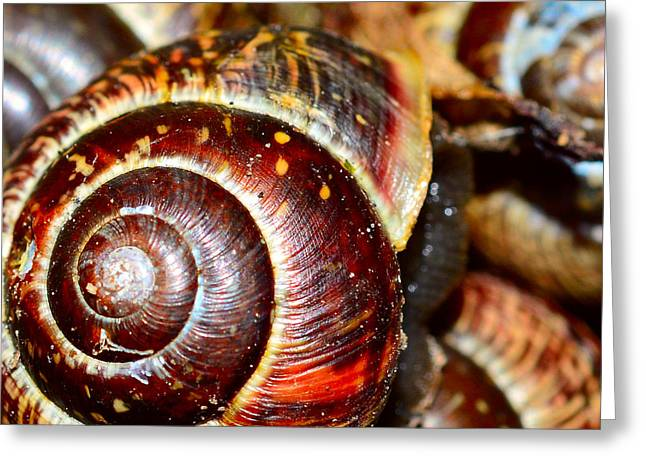 Snails In Closeup  Greeting Card