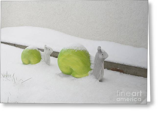 Snails In Snow Greeting Card by Art Photography