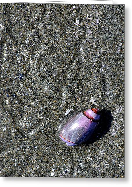 Greeting Card featuring the photograph Snail's Pace by Lisa Phillips