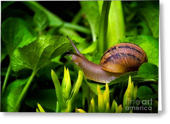 Snail's World Greeting Card