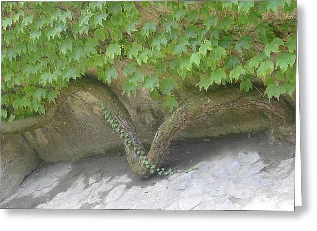 Snake Branch Greeting Card