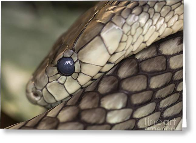 Snake Greeting Card by Lucid Mood