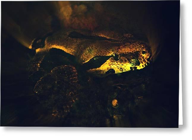 Snake Greeting Card by Valarie Davis