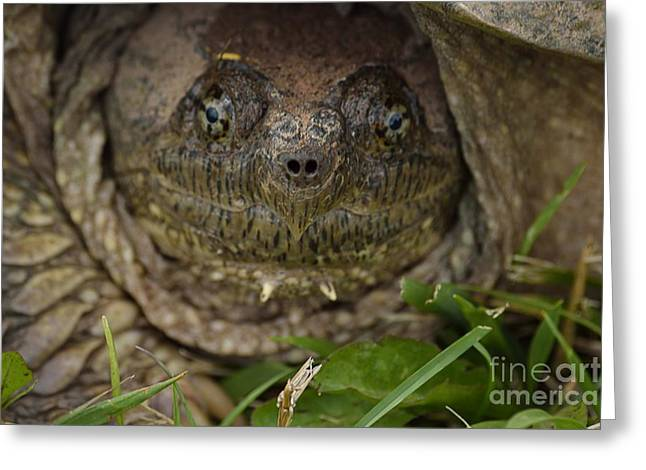 Snapper Greeting Card by Randy Bodkins