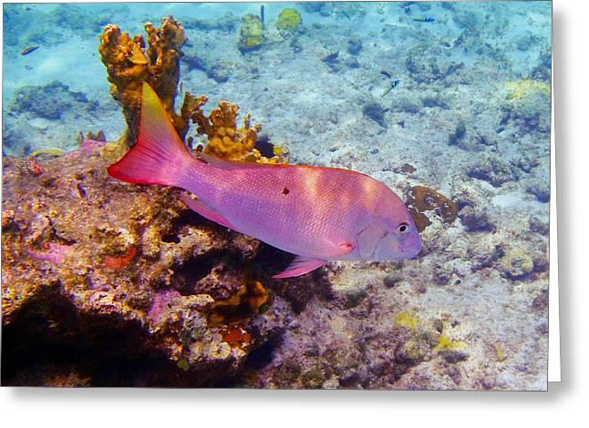 Snapper Reef Greeting Card