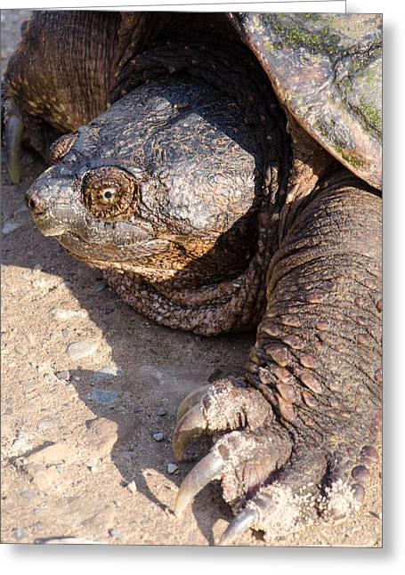 Snapping Turtle Greeting Card by Thomas Pettengill