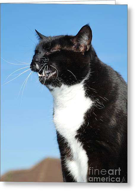 Sneezing Cat Greeting Card