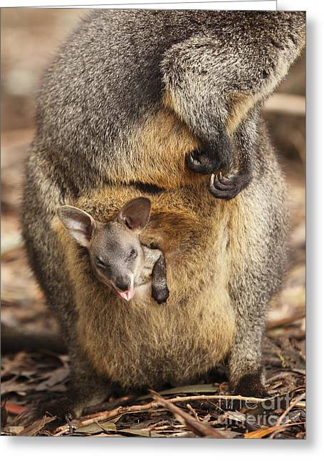 Sneezing Wallaby Greeting Card
