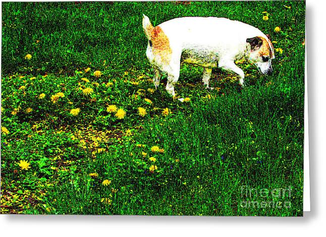 Sniffin The Dandelions Greeting Card by Minding My  Visions by Adri and Ray