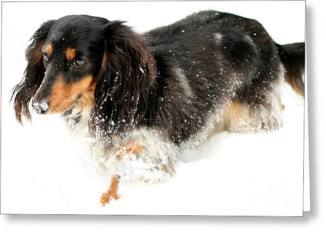 Sniffing Out Snow Greeting Card