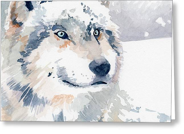 Snow Wolf Greeting Card by Sean Parnell
