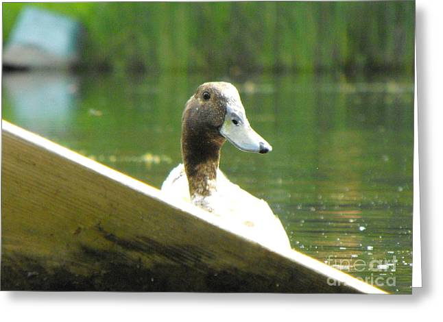 Snooping Duck Greeting Card