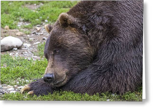 Snoozing Grizzly Greeting Card by Saya Studios