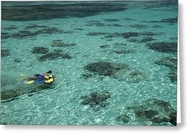 Snorkelers And Reef, Green Island Greeting Card by David Wall