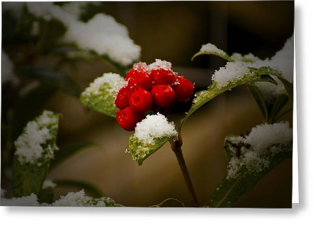 Snow And Berries Greeting Card by Ron Roberts