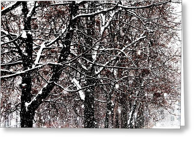 Greeting Card featuring the photograph Snow And Berries - Square by Jacqueline M Lewis