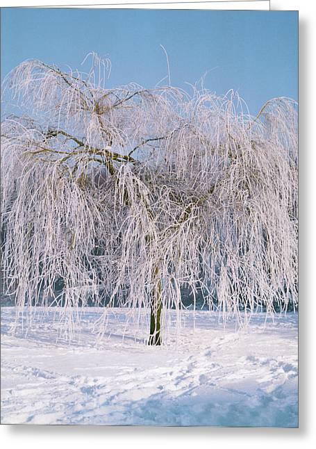 Snow And Hoar Frost. Greeting Card