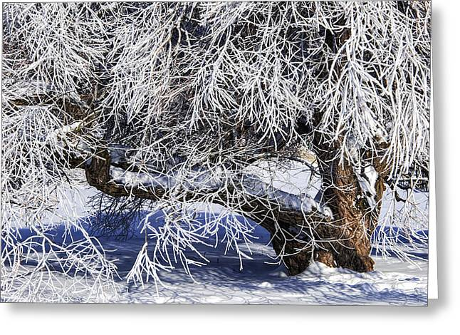 Snow And Ice Covered Tree Greeting Card by Randall Nyhof