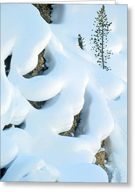 Snow And Tree Greeting Card by Judi Baker