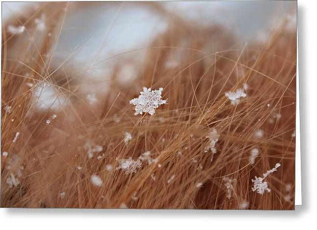 Greeting Card featuring the photograph Snow Beauty by Candice Trimble