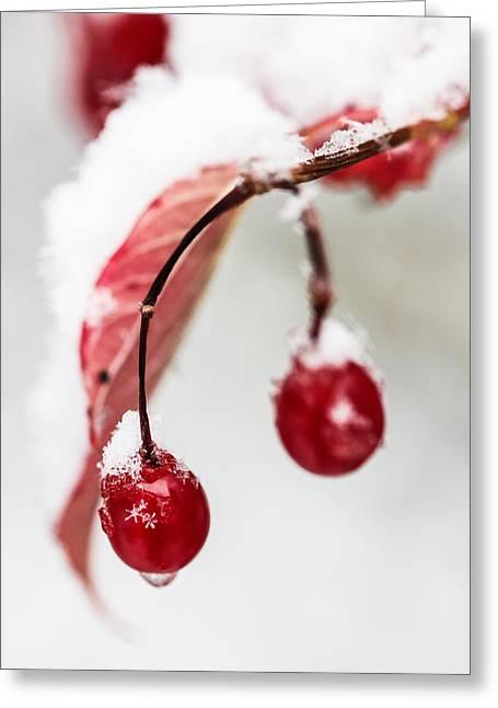 Snow Berries Greeting Card