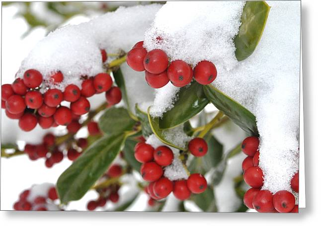 Snow Berries Greeting Card