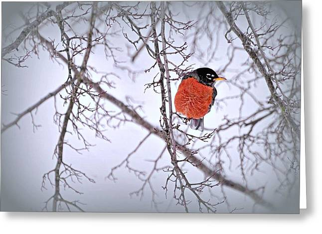 Snow Bird Greeting Card by Diana Angstadt