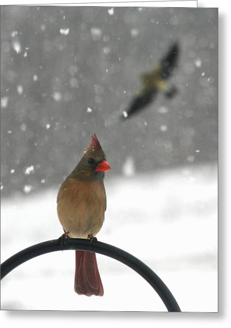 Snow Bird II Greeting Card