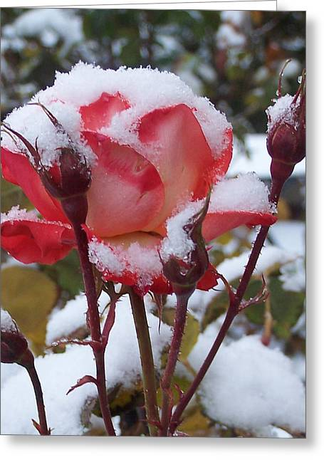 Snow Blooms Greeting Card