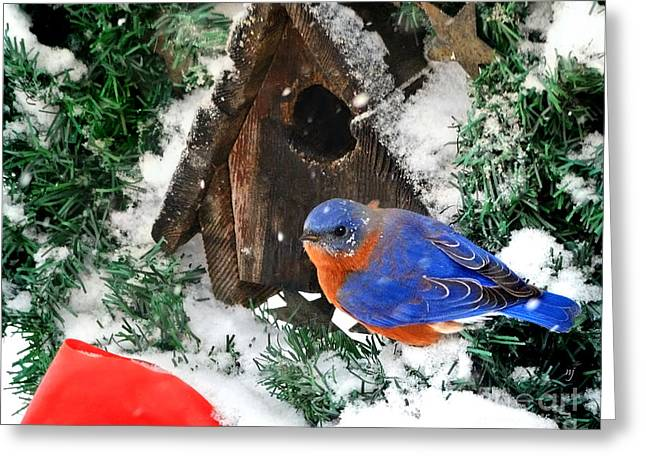 Snow Bluebird Christmas Card Greeting Card by Nava Thompson