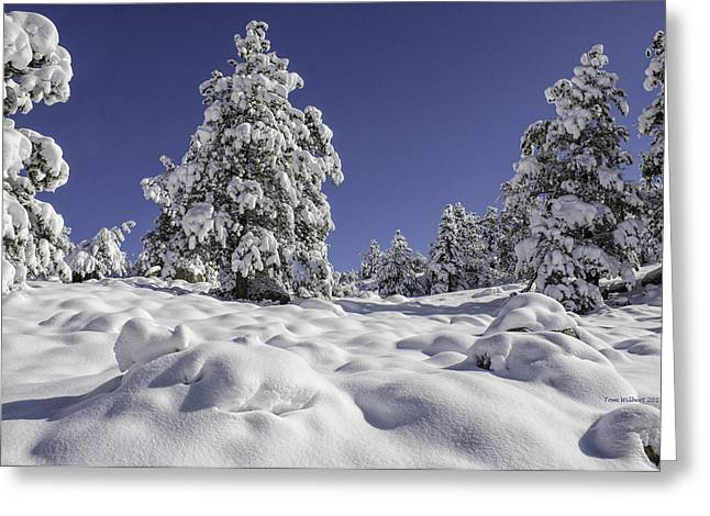 Snow Bomb Greeting Card by Tom Wilbert