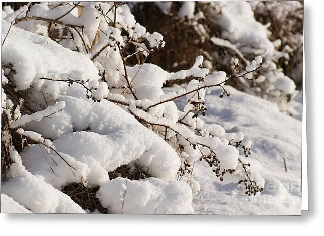 Snow Greeting Card by Carol Lynch