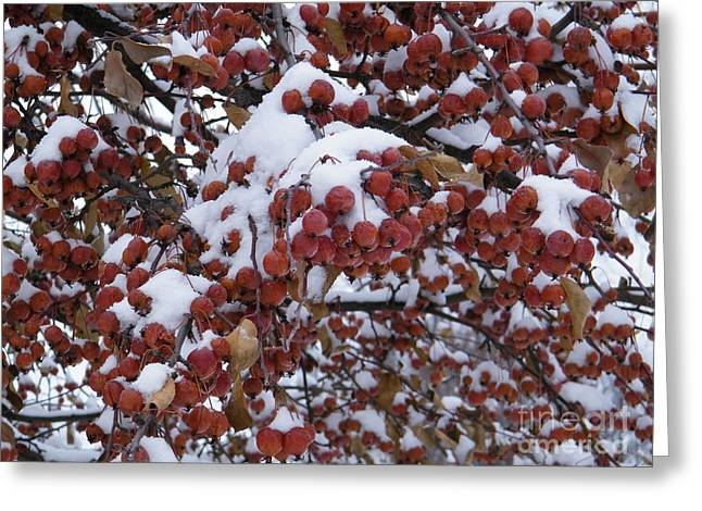 Snow Covered Berries Greeting Card