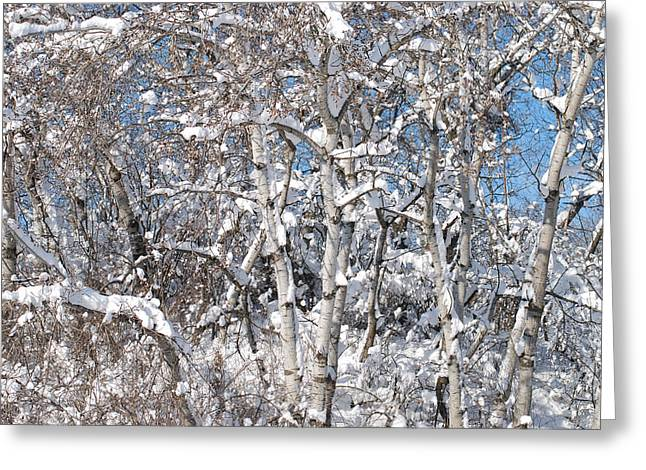 Snow Covered Birch Trees Greeting Card by Janice Adomeit