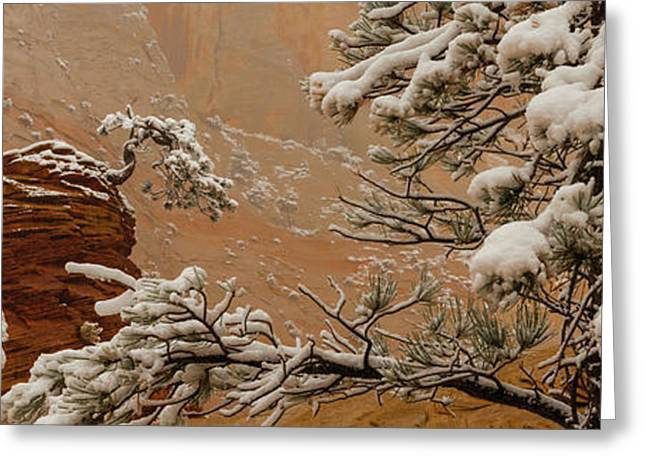 Snow Covered Branches Of Ponderosa Pine Greeting Card by Panoramic Images